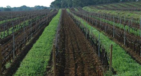Vin bio et culture biologique