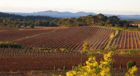 AOC Côtes de Provence La Londe